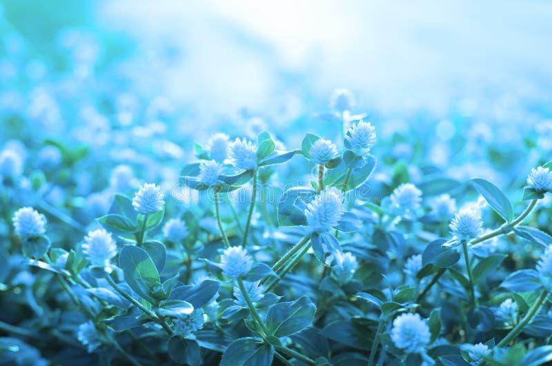 Gras der weißen Blume der Weichzeichnung mit Fotofilter stockfoto