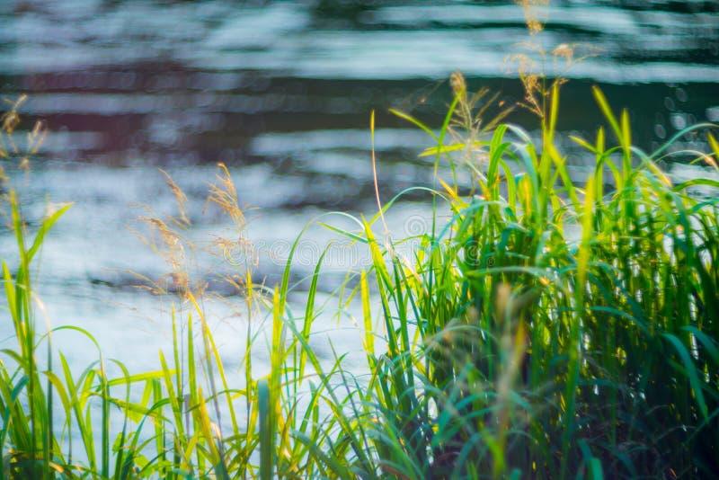 Gras dichtbij water stock fotografie