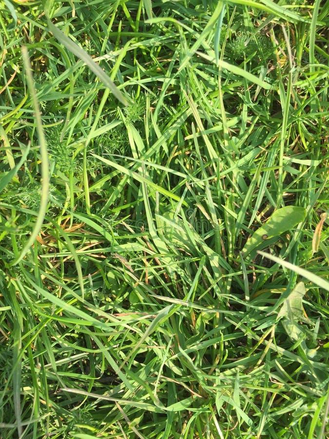 Gras dichte omhooggaand voor achtergrond royalty-vrije stock foto's