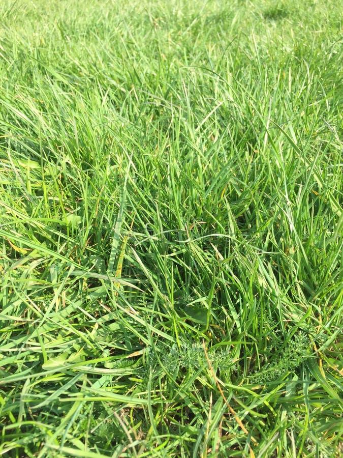Gras dichte omhooggaand voor achtergrond royalty-vrije stock afbeelding