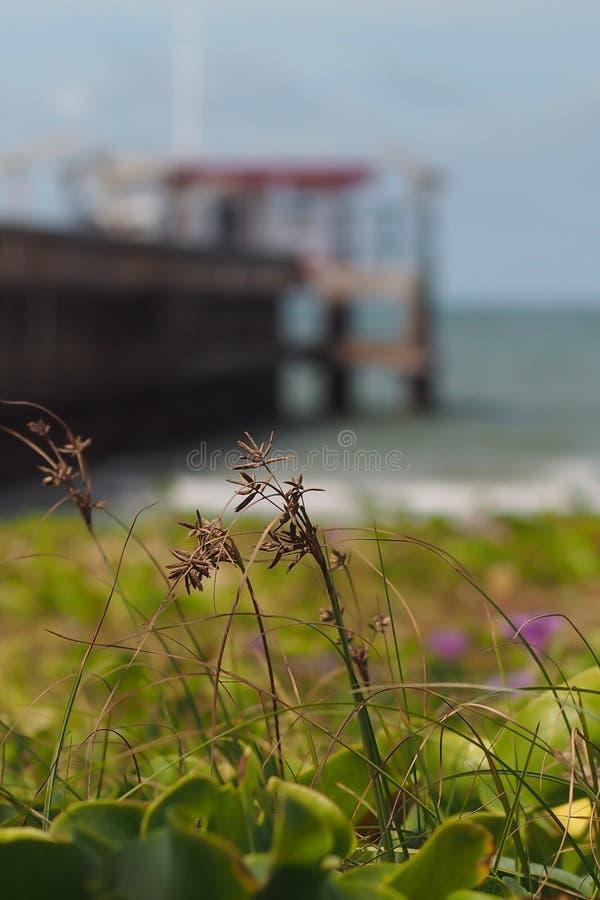 Gras door het overzees dichtbij de jachthaven op de zeebodem en de blauwe hemel royalty-vrije stock foto