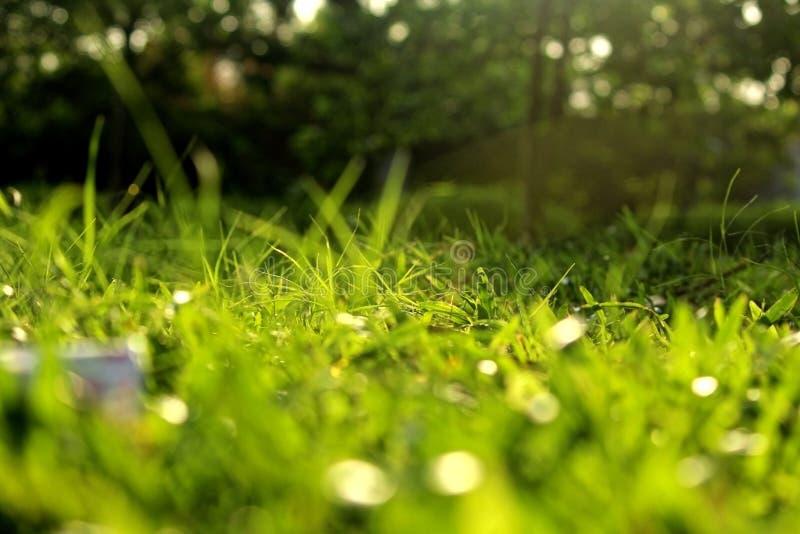 Gras door het zonlicht royalty-vrije stock fotografie