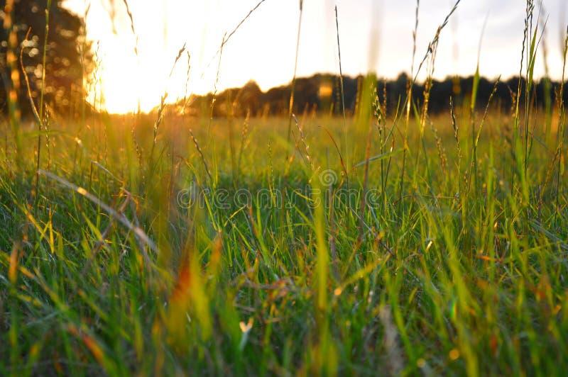 Gras door zon wordt benadrukt gelijk te maken die stock fotografie