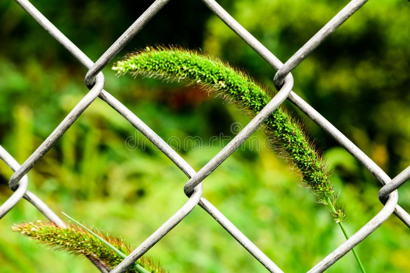 Gras durch den Zaun stockfotografie