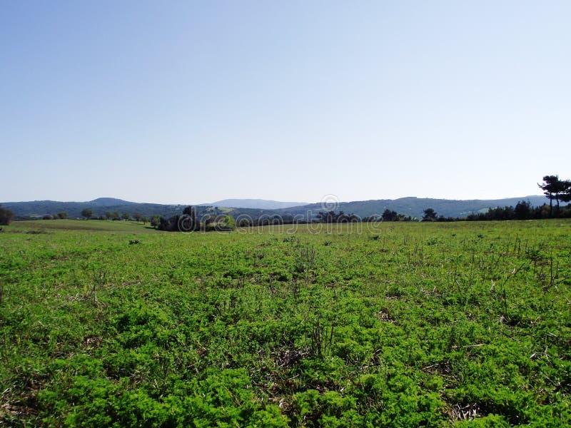Gras en bergen stock fotografie