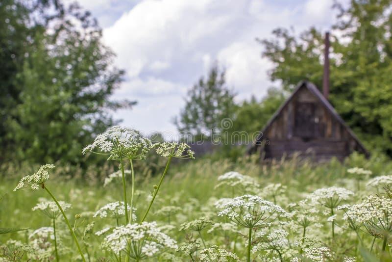 Gras en bloemen op het gebied, op de achtergrond een dorpshous royalty-vrije stock fotografie