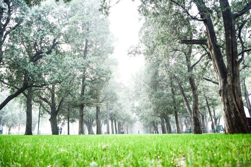 Gras en bomen royalty-vrije stock foto
