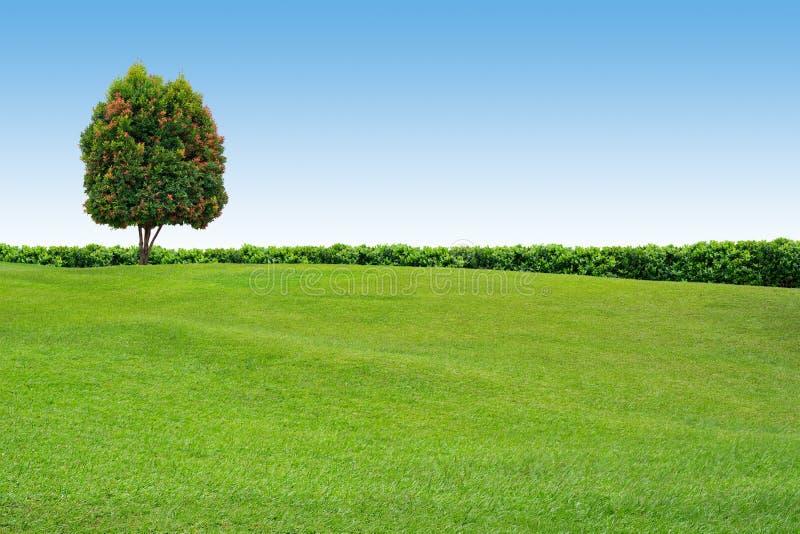 Gras en boom op duidelijke hemel stock afbeelding