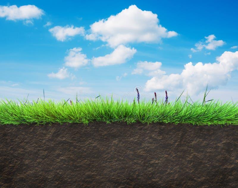Gras en grond stock afbeeldingen