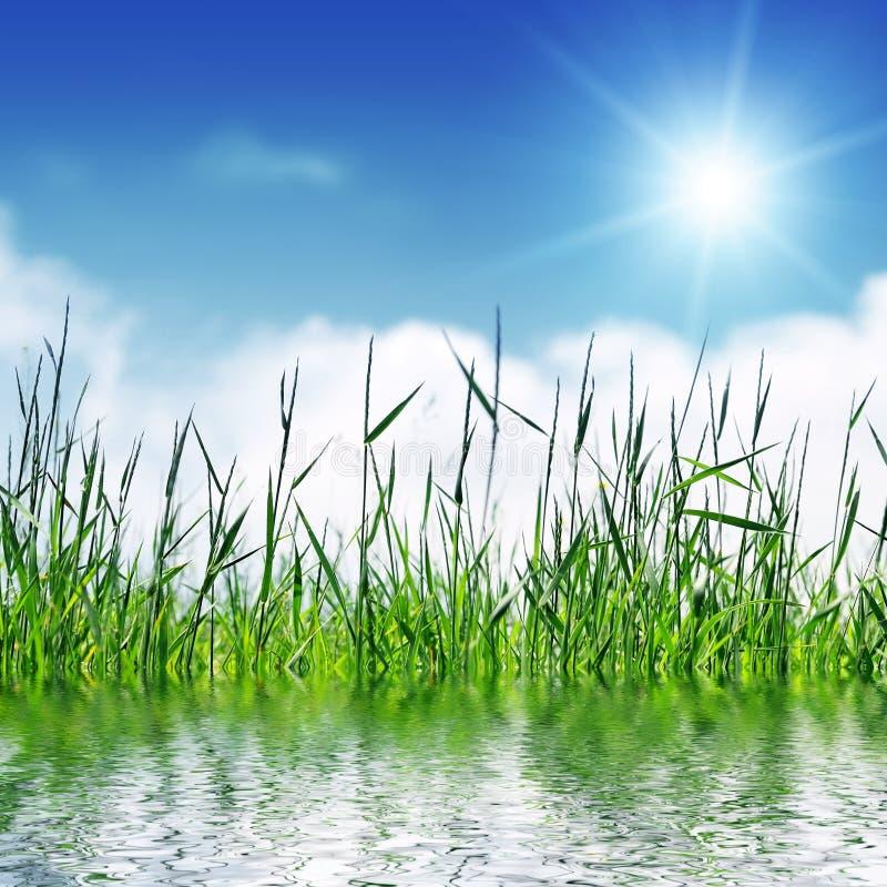 Gras en hemel met zon stock afbeeldingen