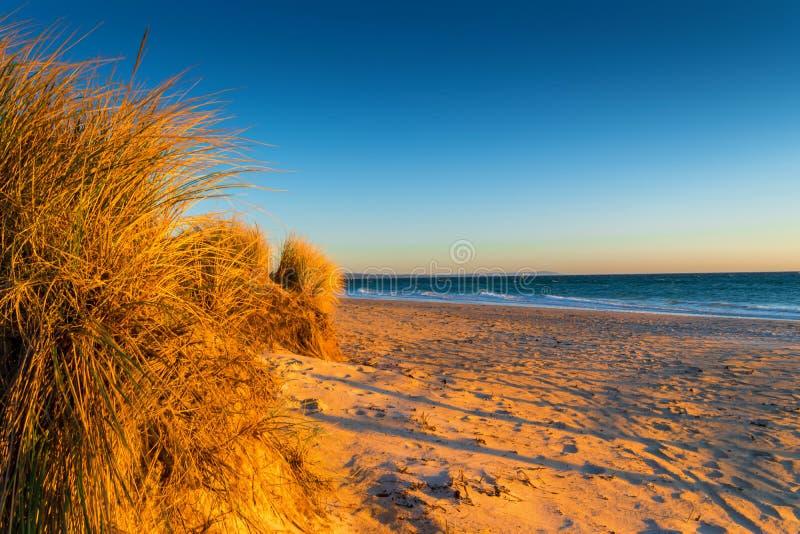 Gras en strand bij zonsondergang stock afbeelding