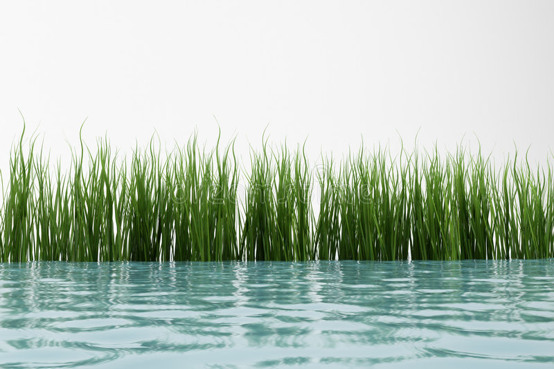 Gras en water stock illustratie