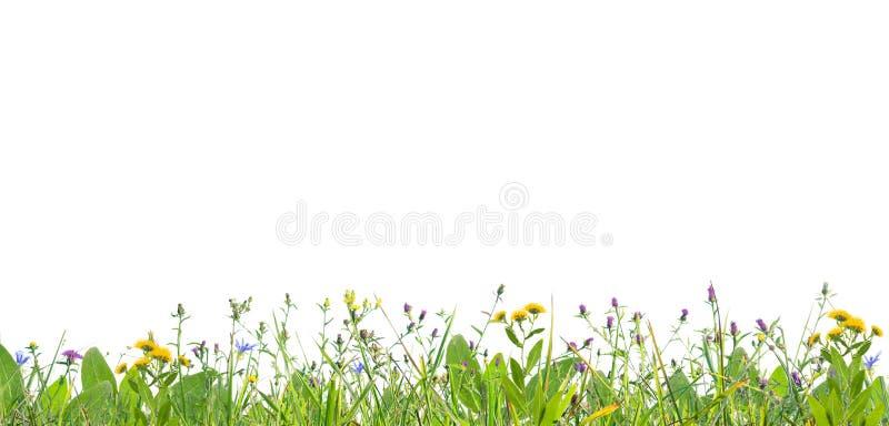 Gras en wilde bloemen stock afbeeldingen