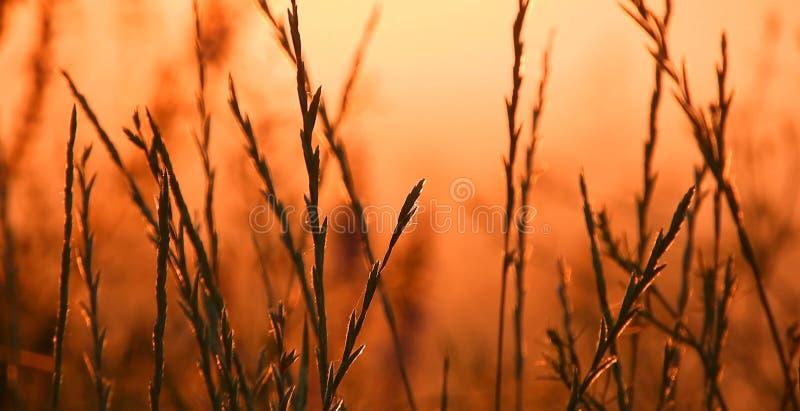 Gras en zonsondergang, de zomertijd stock fotografie