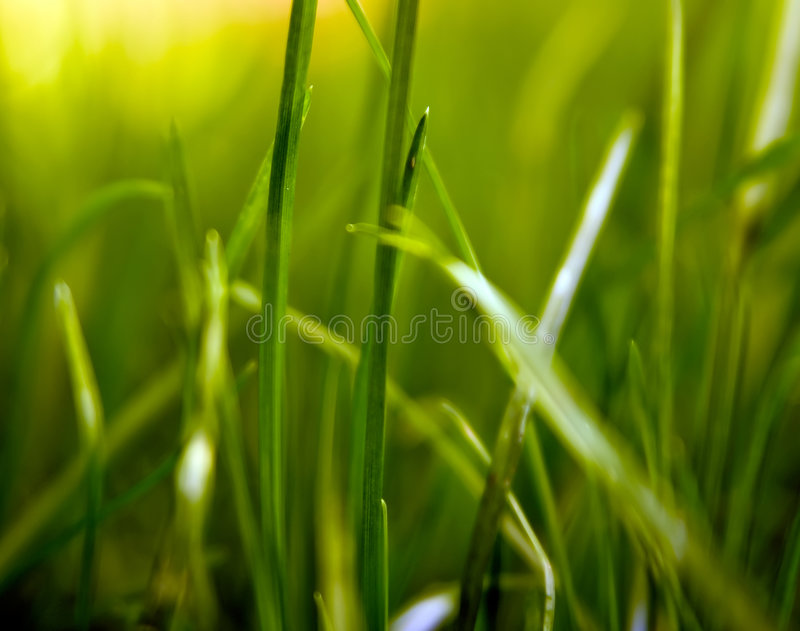 Gras-Formen stockfoto