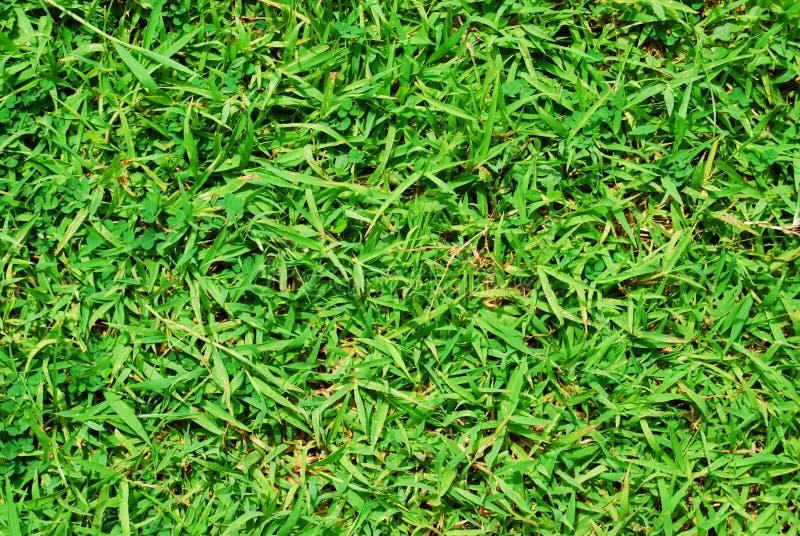 Gras-Grün-Natur lizenzfreie stockbilder