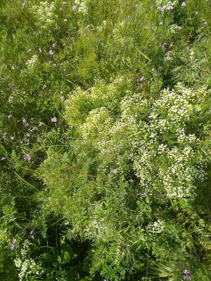 Gras groene en gele st royalty-vrije stock afbeelding