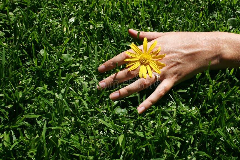 Gras-Hand stockbilder
