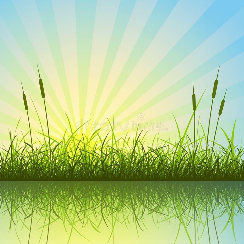 Gras-Hintergrund vektor abbildung