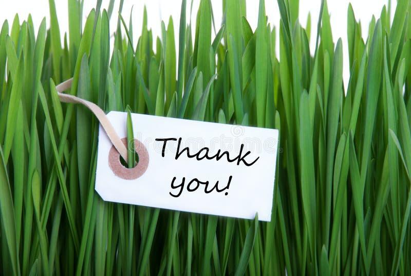Gras-Hintergrund mit danken Ihnen lizenzfreies stockfoto