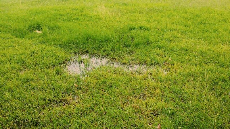 Gras im Regen stockbilder