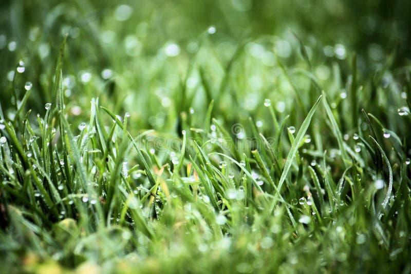 Gras im Tau stockfoto