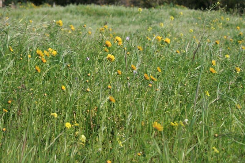 Gras im Wind stockfotografie