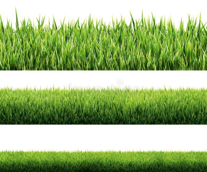Gras lokalisiert stockfoto