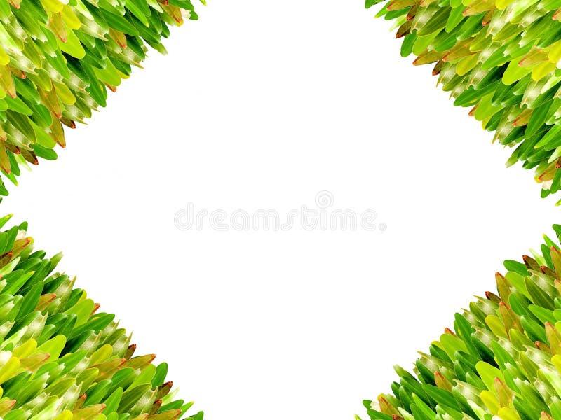 Gras lokalisiert für Textrahmen stock abbildung