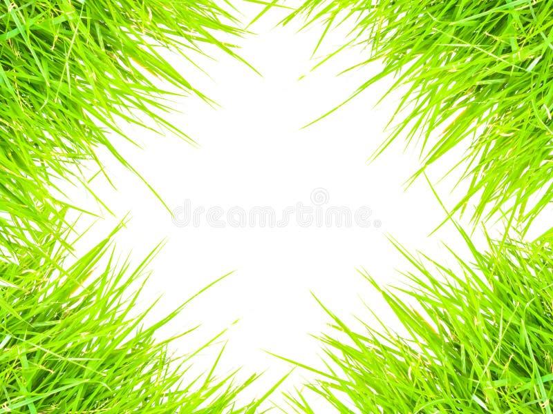 Gras lokalisiert für Textrahmen und -hintergrund lizenzfreies stockbild
