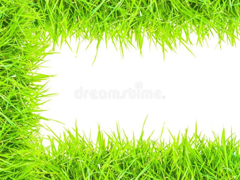 Gras lokalisierte Grenze C lizenzfreie stockbilder