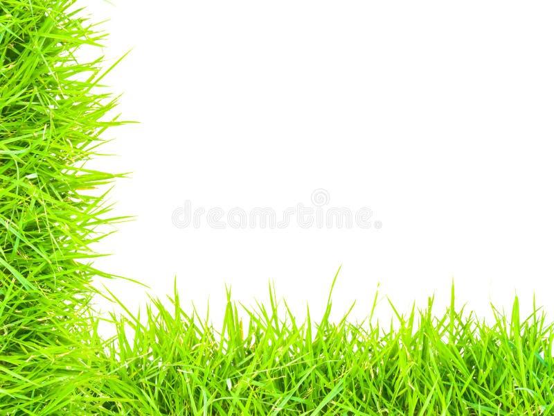 Gras lokalisierte Grenze L lizenzfreie stockbilder