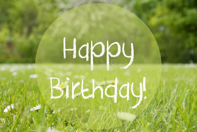Gras Meadow, Daisy Flowers, Text Happy Birthday royalty free stock photos