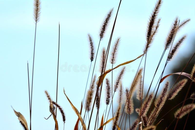 Gras met blauwe achtergrond royalty-vrije stock fotografie