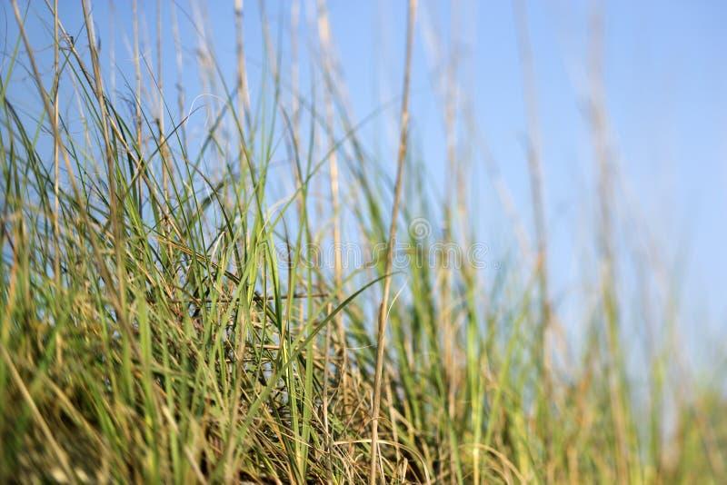 Gras met blauwe hemel. stock afbeeldingen