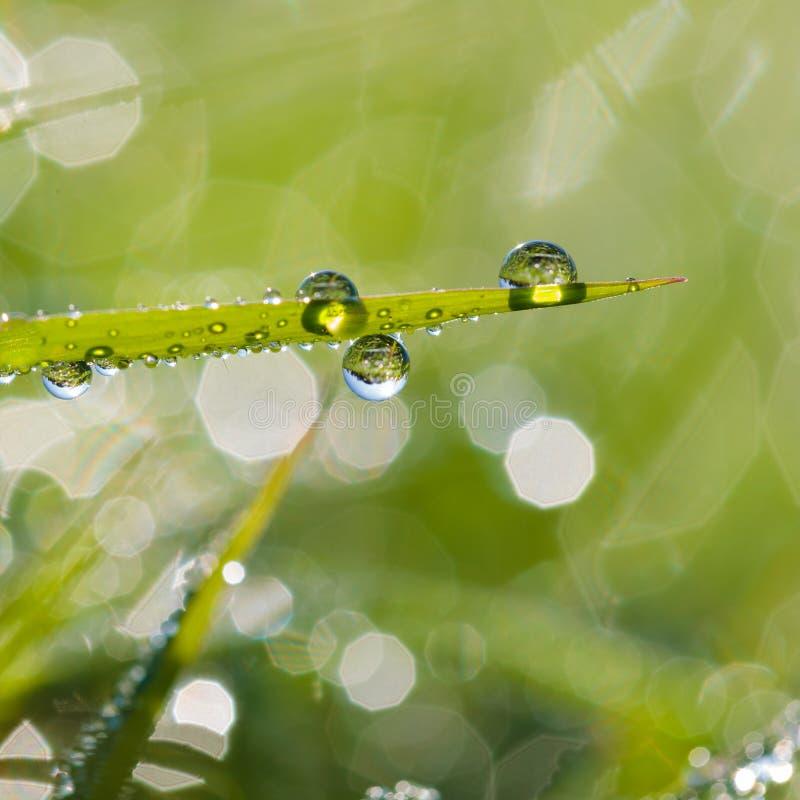 Gras met dauw royalty-vrije stock foto
