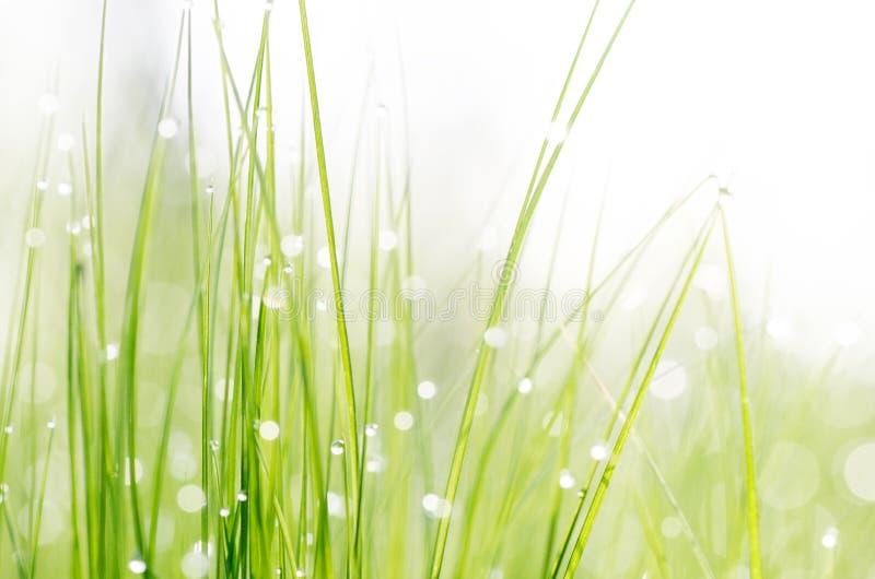 Gras met dauwdalingen stock fotografie
