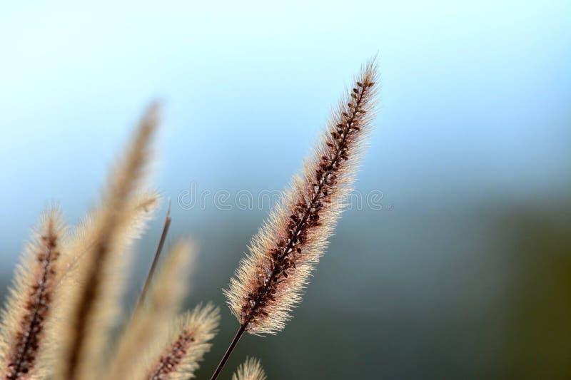 Gras met een blauwe achtergrond stock foto
