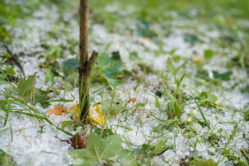 Gras met hagelstenen na hagelbui wordt behandeld die stock fotografie