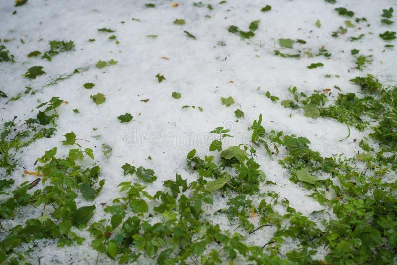 Gras met hagelstenen na hagelbui wordt behandeld die stock foto