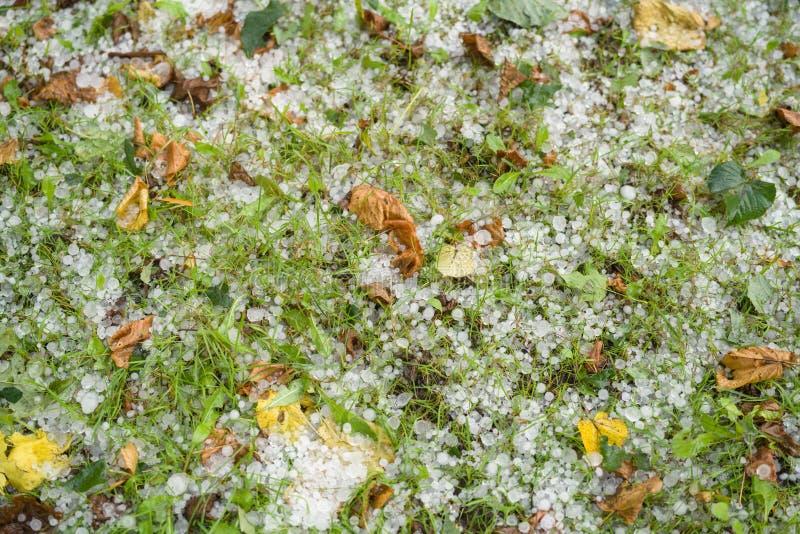 Gras met hagelstenen na hagelbui wordt behandeld die stock foto's
