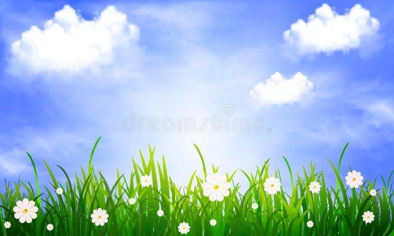 Gras met madeliefjes op een achtergrond van blauwe hemel met wolken stock illustratie