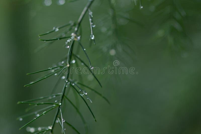 Gras met regendalingen Water gevend gazon Regen Vage Grasachtergrond met de close-up van Waterdalingen nave Het concept van het m stock foto