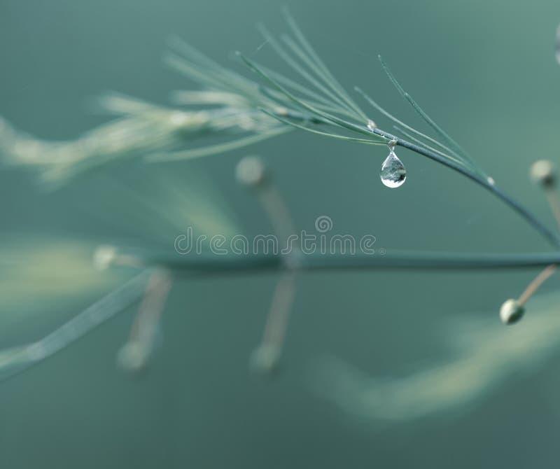 Gras met regendalingen Water gevend gazon Regen Vage Grasachtergrond met de close-up van Waterdalingen nave Het concept van het m royalty-vrije stock afbeelding