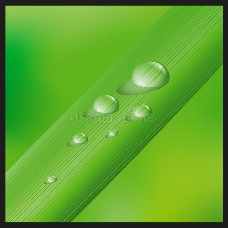 Gras met waterdrops vector illustratie