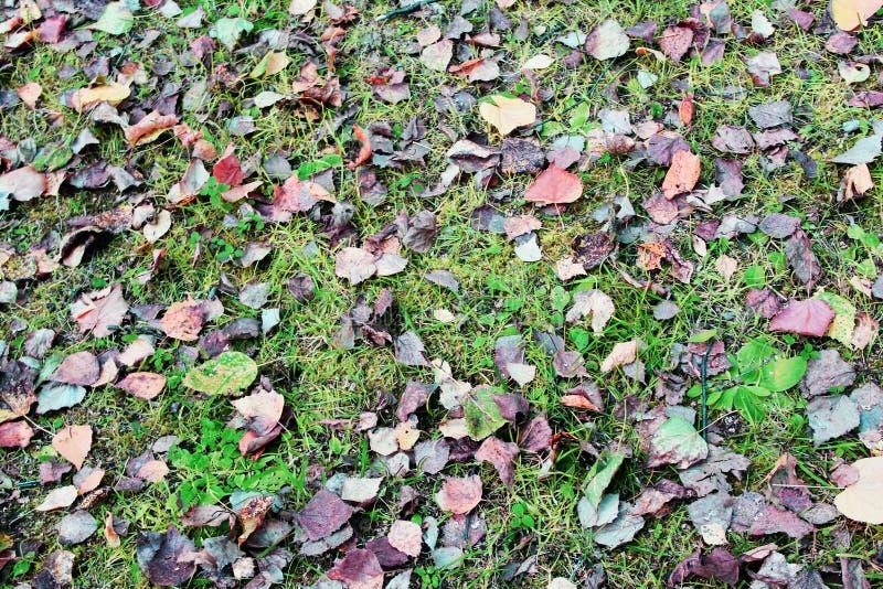 Gras mit Blättern lizenzfreie stockfotografie