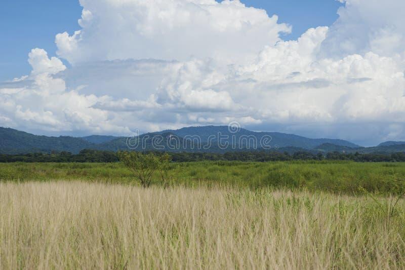 Gras mit blauem Himmel der Wolken lizenzfreies stockbild