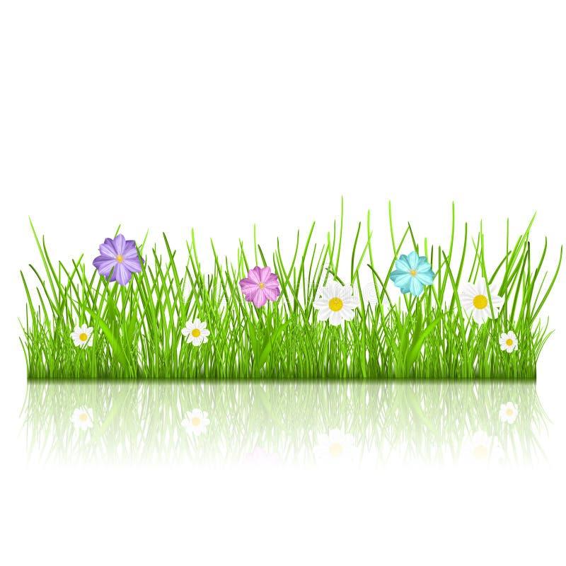 Gras mit Blumen lizenzfreie abbildung