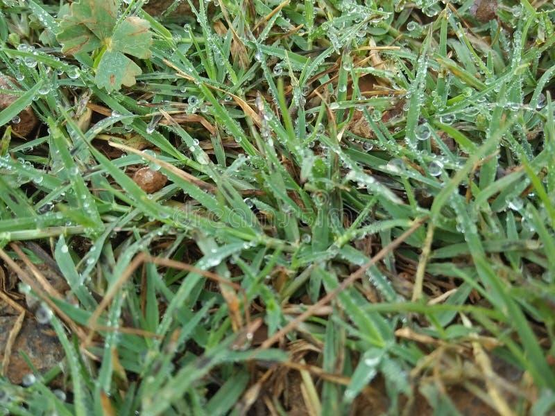 Gras mit Morgentau stockfotografie