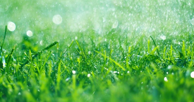 Gras mit Regentropfen Bew?sserungsrasen Frisches gr?nes Fr?hlingsgras mit Tautropfennahaufnahme stockbilder